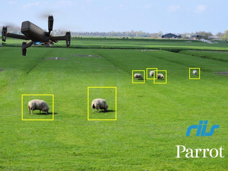 Parrot SDK: ANAFI Drohne zählt Schafe mit AI