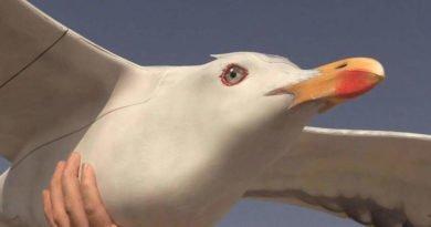 AVES Vogeldrohne