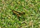 Eim Bild einer Heuschrecke