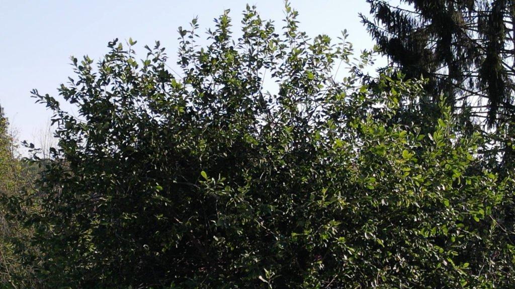 Mavic Air 2 1080p - 3x Zoom