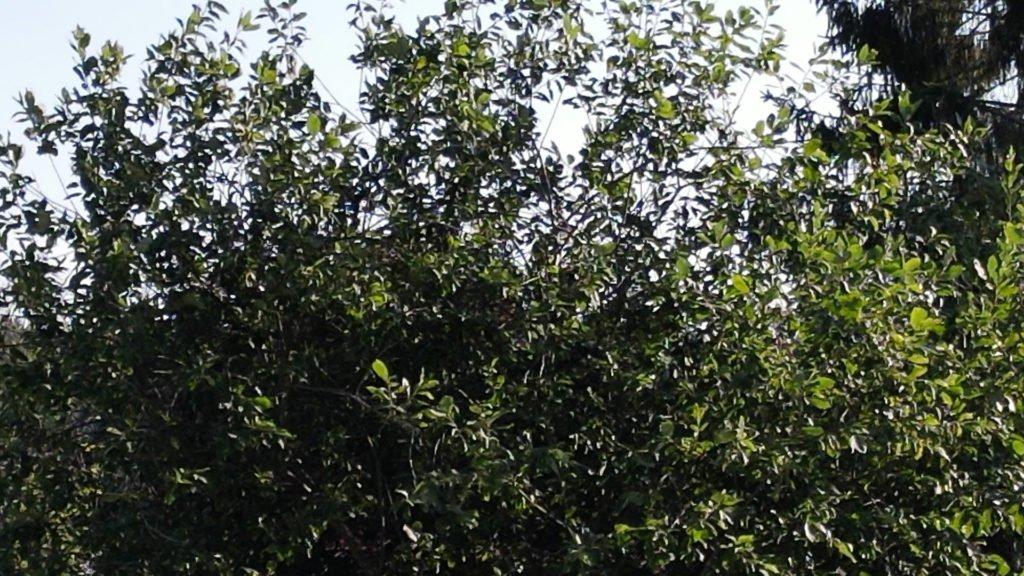 Mavic Air 2 1080p - 4x Zoom