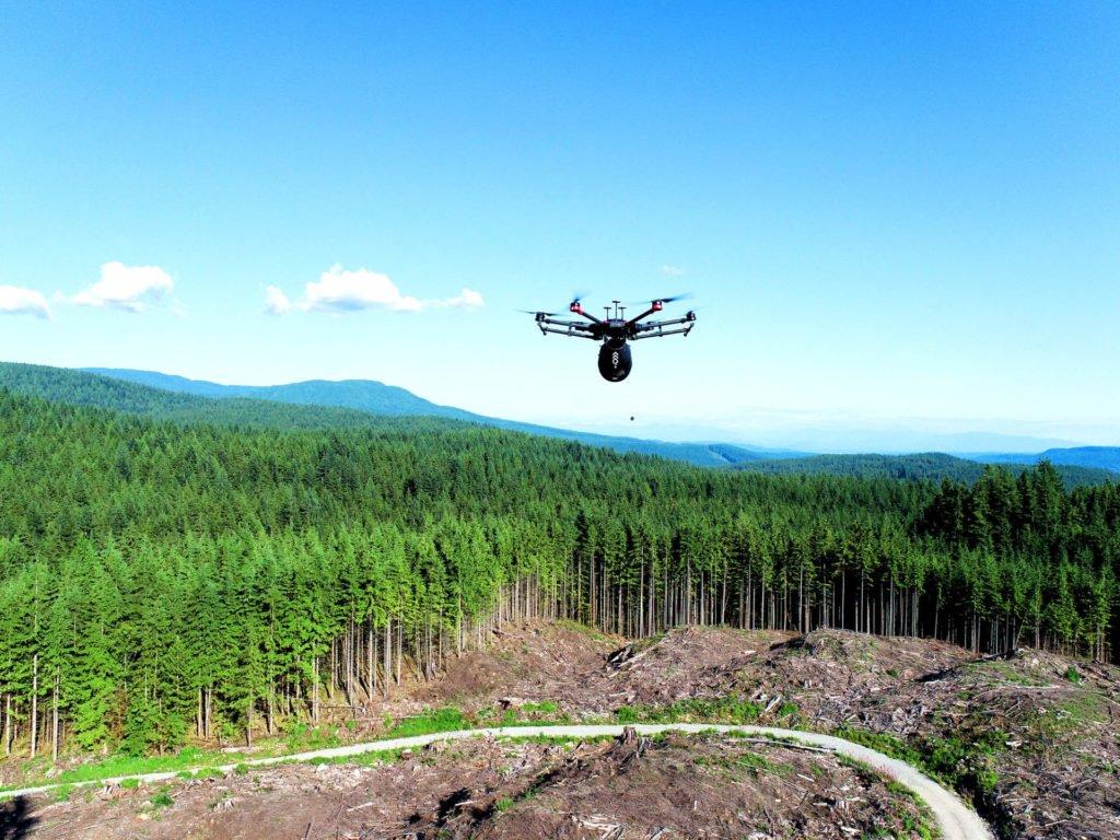 Flash Forest Drohne in Aktion beim Pflanzen